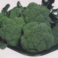 Premium_crop_hybrid_broccoli