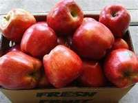 Red_delicious_apples