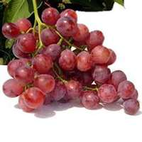Red_seedless_grapes