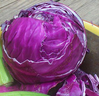 Cabbage_red_acre